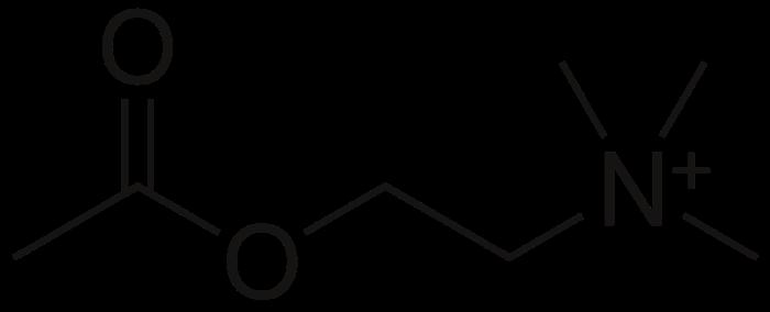 1200px-Acetylcholine.svg (1)